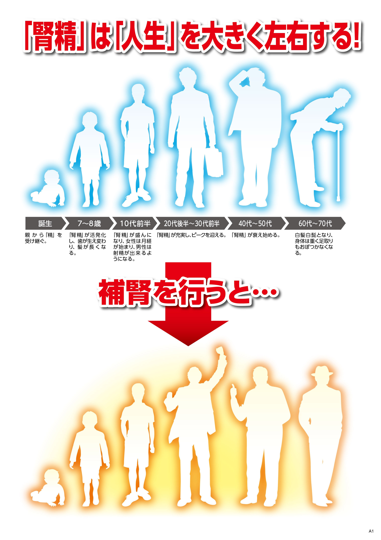 腎精補腎チャートB4(裏).jpg