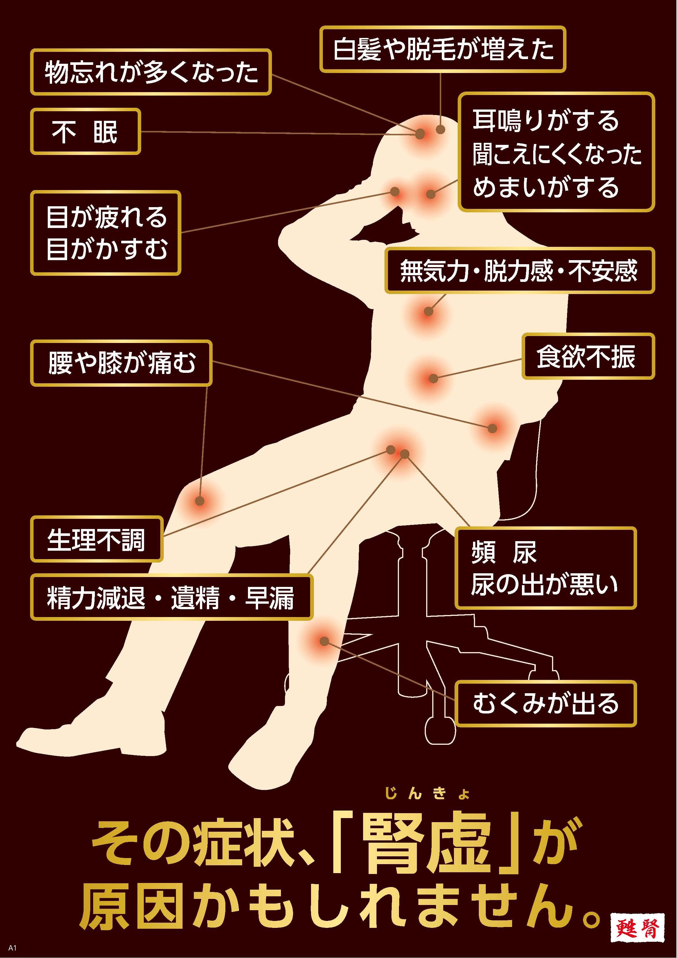 腎虚人体ポスターA3.jpg